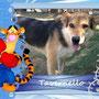 gennaio- 2014- Tavernello finalmente è stato adottato!!!