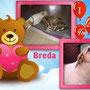 10 novembre 2016 - Breda è andata a casetta: eccola con uno sguardo pieno d'amore per la sua famiglia e col suo amico peloso...sono inseparabili!!!