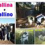 12 novembre 2016 - Pallina e Pallino a casetta insieme...grazie Kasia Smutniack per  averli accolti nella tua vita!!! siate felici pelosetti...