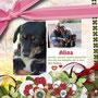18 ottobre 2014 - Alina, dolce pelosetta dagli occhi tristi... è stata adottata!!!... Anche lei scoprirà la felicità di sapere che c'è qualcuno che ti ama e si prende cura di te...