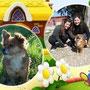 marzo 2014- Trilly è passata come una meteora nel nostro Rifugio: ha trovato subito la sua mamma! E' stata adottata da Francesca ed è andata a vivere a Bracciano...siate felici insieme!!!