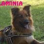 14 giugno 2016 - Flaminia...una pelosetta così tenera e coccolona ha trovato chi si è innamorato di lei nonostante il suo piccolo handicap... ora vive felice con la sua famiglia a Manziana!!!