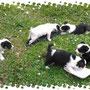 3 aprile 2015- tutti adottati i cuccioli di Cesano, di cui Amici di Fido si è occupata... siate felici patatini!!!...