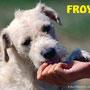 """ottobre 2015 - Froy, splendido e tenero """"baffetto""""...è stato adottato!!! gioia immensa per te..."""