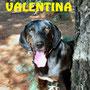 giugno 2017 - Valentina, la nostra tenera decana, è stata adottata da Enrica...