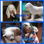 27 agosto 2014 - Briosch (ex Akim) è stato adottato ed è andato a vivere in provincia di  Como con la sua splendida mamma, Michela...una vita meravigliosa ti attende, dolce orsetto!!!,