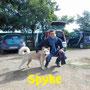26 ottobre 2015- Spyke...è arrivato il tuo momento di essere felice!!! buona vita, dolce pelosotto...