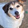 2012 - Luna, questa dolce cagnolina ha trovato chi si è innamorato di lei e ha deciso di tenerla per sempre con sé...