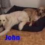 """novembre 2015- John è stato adottato...eccolo felice, a casetta, insieme al suo """"fratello"""" peloso!!! divertitevi ragazzi e siate felici insieme..."""