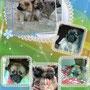 gennaio 2014- il trio di pelosetti cicciosi...ha trovato chi li amerà x sempre!!! siate felici coccoloni!!!