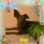 novembre 2013 - Ray, mini pelosetto, ha trovato casetta!!! Felice vita e tante coccole...
