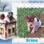 """dic 2014 - BRUNO (ex Rolfi) ha trascorso un Natale fantastico nella sua nuova casetta, con i suoi splendidi """"genitori"""" Vanessa e Andrea...è diventato il principino di casa: tanto amore e coccole per lui!!!..."""