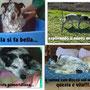 marzo 2014- Sheila, la nostra dolce veterana, ce l'ha fatta: è stata adottata! E a casa nuova ha trovato anche un amico, Rocco! sii felice Sheila...