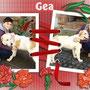 2 dicembre 2014- GEA, ex Loila, è stata adottata: eccola felice con la sua mamma verso la sua nuova vita!!!