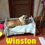 15 settembre 2016 - Winston, questo bullo un po' attempato e pigrone, è andato a vivere a Roma con Steve e Mary, pazzi di lui, ma del resto... come resistergli
