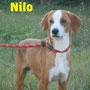 2gennaio 2017 - Nilo