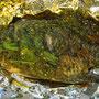 In Alufolie gedämpfter und mit feinsten Kräutern marinierter Fisch.