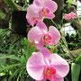 Orchideen im Orchideenhaus. (BG)