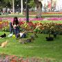 """Der """"Katzenpark"""" (Parque Central) macht seinem Namen alle Ehre. Unzählige Privatpersonen füttern täglich die vielen Vierbeiner."""