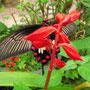 Ein Prachtexemplar von Schmetterling.