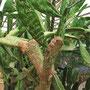 Verewigungen auf einem Kaktus.