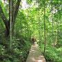 """Auf dem Weg zum """"Canopy Walkway"""", dem sog. """"Wipfel-Walk""""."""