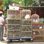 Chinatown (Glodok).