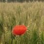 Linx ist umgeben von Feldern