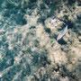 Unterwasserwelt des Ningaloo-Riffs