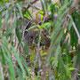 Wer versteckt sich da?
