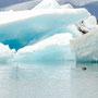 Robben im Gletschersee