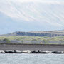 Robben in der Fjordlandschafts Hindisviks