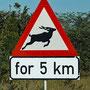 Für die nächsten 5 km könnte Wild die Strasse queren.