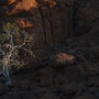 Sonnenuntergangsstimmung mit Baum in Felslandschaft