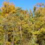 Herbst, so viel Farbe gibt es erst in Monaten wieder!