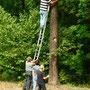Zum Schmücken musste man auch auf Bäume steigen.