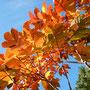 きれいなナナカマドの紅葉