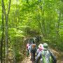 「ブナの路」で山頂へ向かいます。その名の通りブナ林が続きます。