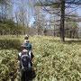 茶ノ木平は、クマザサに覆われた道を進んでいきます。