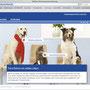 Online Auftritt mit Gefahrenaufklärung aus des Sicht der Kernzielgruppe (Katze/Hund)