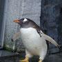 ジェンツ-ペンギン