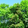 Forêts argonnaises en Meuse