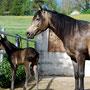 10.05.2012: Delightful Joleene, Stutfohlen von Delights Are On