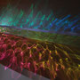 Luminous flux/2017/偏光フィルム・木材/サイズ可変