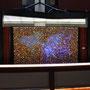 ART COLORS vol.17 「妖-あやかし-のアクアリウム」/2016/偏光フィルム・アクリル・フィギュア・木材/H200×W350cm
