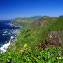 海を眺めながら、同時に高山植物も見ることができる。緯度が高いから当たり前のことだけど、贅沢に思える。いや、本当は綺麗な景色が見られるのは当たり前のはず。当たり前の地球風景…。<礼文島>