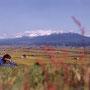 時は流れていく。夏の間、旅人達でにぎわった場所も、今は静かな秋。僕一人が見下ろす大地。                     山には冬が来ても、夏の思い出は鮮やかなままに…。                                 富良野 北海道