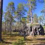 巨石と大木の森。北極圏の森は、思いのほか明るい雰囲気だった。Otsamoという低山に向かうトレッキングコース。フクロウを始めとする野鳥の声に包まれる。乾いた地面も歩きやすくていい。<Inari-FINLAND>