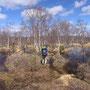 果てしない湿地帯を進む。道標は地面に埋めて立ててある小さな木柱。ときどき見失って勘で進む。晴れて明るい雰囲気だから良いが、暗い空ならば悲壮感が漂うだろう。<Sevettijarvi-FINLAND>