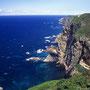 海鳥たちの聖地とも言うべき断崖。日本ではこの小さな島でしか繁殖しないオロロン鳥(ウミガラス)は、日本から絶滅寸前である。人間により、北海道の生態系が激変している事実を知らなければならない。<天売島>